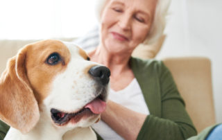 Should You Consider Getting a Senior Loved One a Pet?
